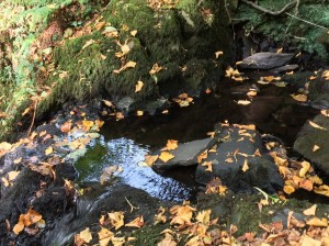 Brook and Leaves