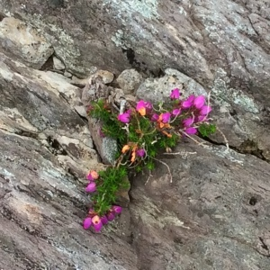 flowers in rocky crag